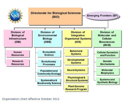 Bio Directorate Org Chart