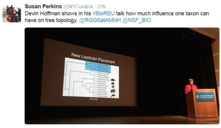 Devin Hoffman shows in his #BioREU talk how much influence one taxon can have on tree topology. @RGGSatAMNH @NSF_BIO