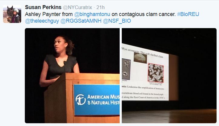 Ashley Paynter from @binghamtonu on contagious clam cancer. #BioREU @theleechguy @RGGSatAMNH @NSF_BIO