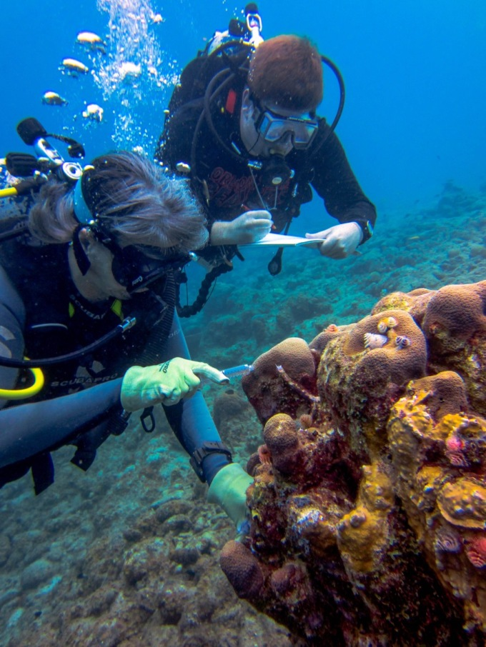 Scuba diving researchers collect samples from coral.